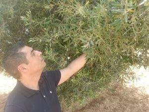 harvest-bulk-olive-oil